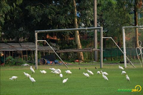 Buổi tập của ĐT Việt Nam tại Myanmar bị quấy rầy bởi chim hình ảnh