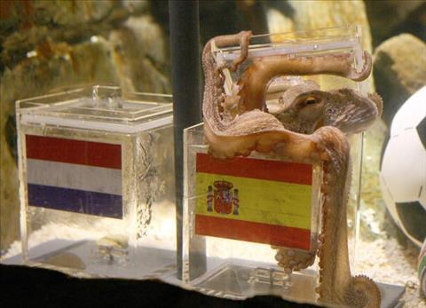 Bí ẩn về ma thuật dự đoán World Cup của bạch tuộc Paul hình ảnh