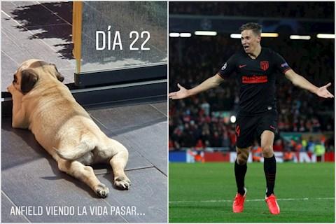 Tiền vệ Marcos Llorente lấy Anfield làm tên chó hình ảnh