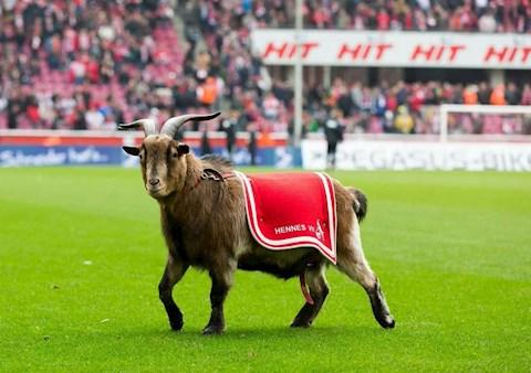 Đội bóng Đức nhận lệnh cấm oái oăm ngày Bundesliga trở lại hình ảnh