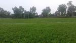 Video: Thu vi san tap nam canh ruong rau cua DT Viet Nam tren dat Myanmar